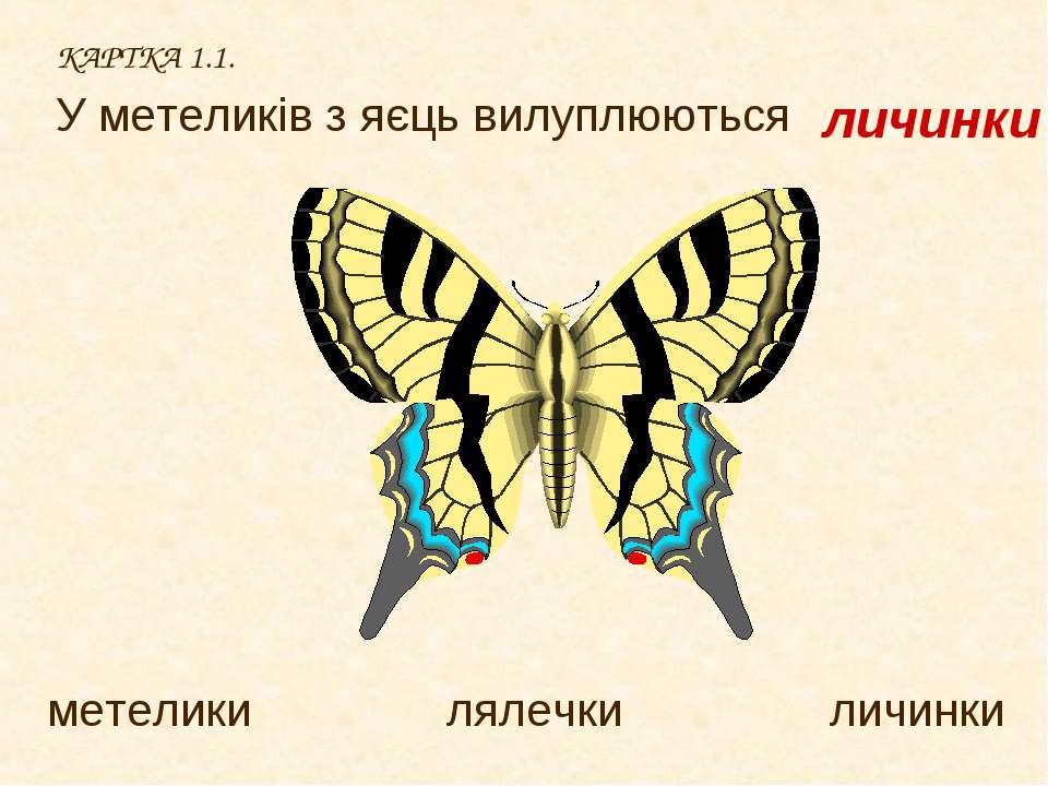 КАРТКА 1.1. У метеликів з яєць вилуплюються метелики лялечки личинки личинки