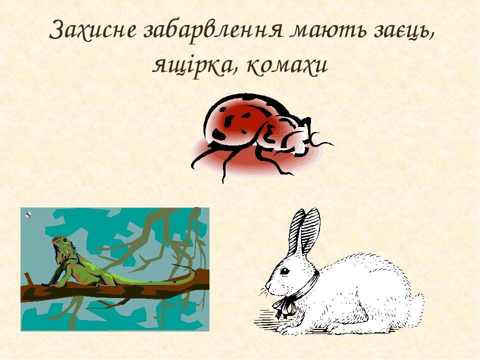 Захисне забарвлення мають заєць, ящірка, комахи
