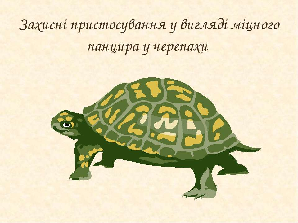 Захисні пристосування у вигляді міцного панцира у черепахи