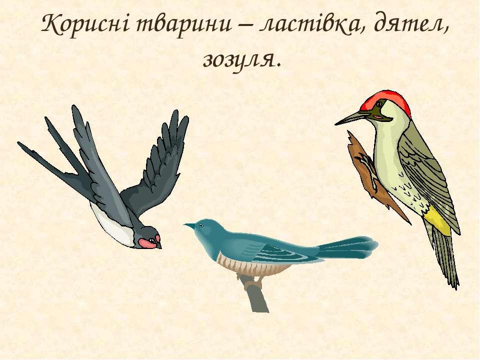 Корисні тварини – ластівка, дятел, зозуля.