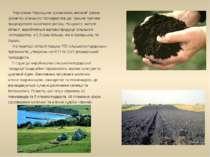 Чорноземи Черкащини зумовлюють високий рівень розвитку сільського господарств...