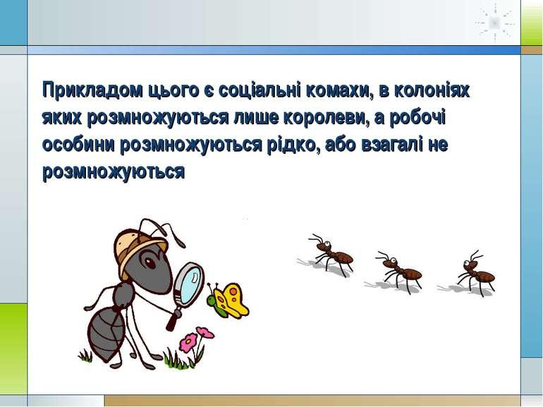 Прикладом цього є соціальні комахи, в колоніях яких розмножуються лише короле...