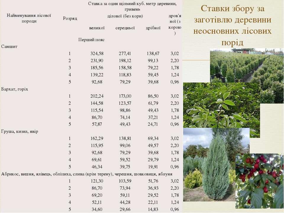 Ставки збору за заготівлю деревини неосновних лісових порід Найменування лісо...
