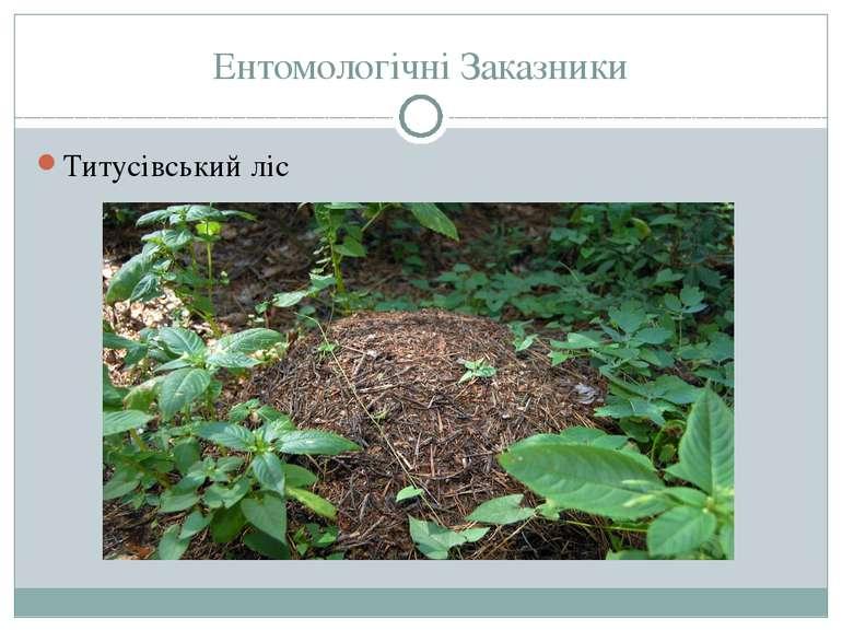 Ентомологічні Заказники Титусівський ліс