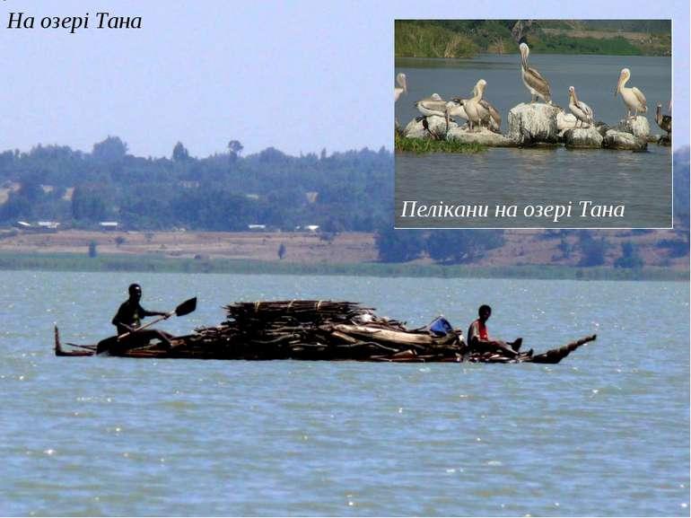 На озері Тана