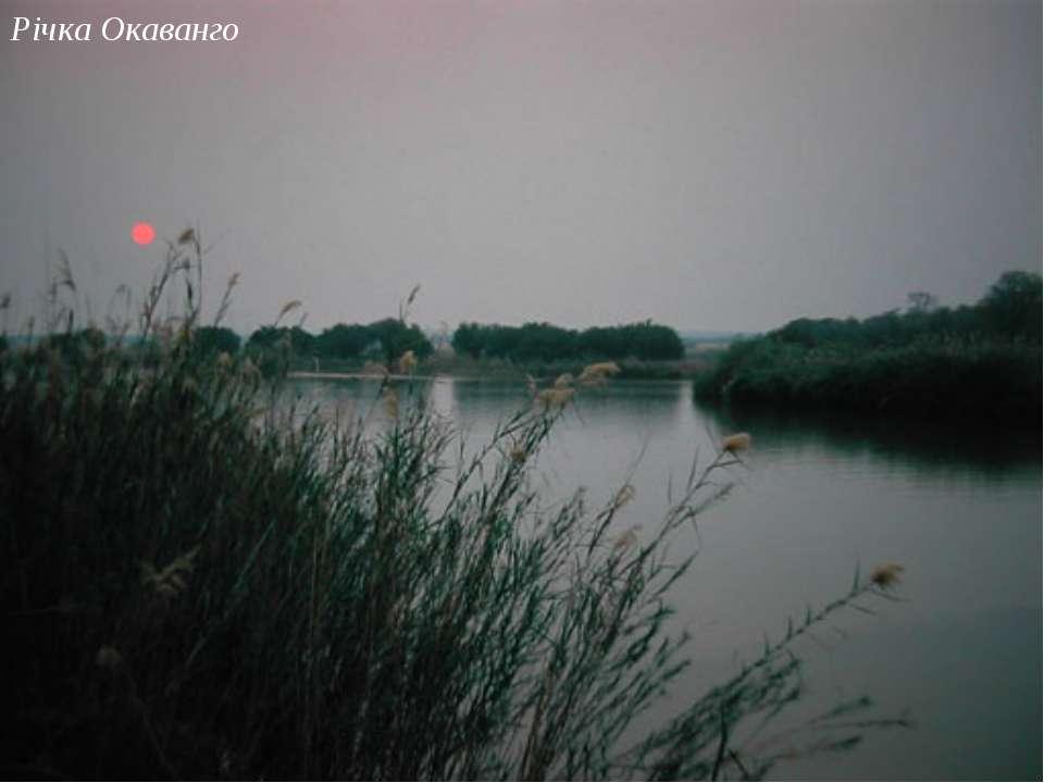 Річка Окаванго