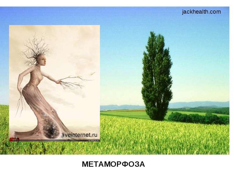 jackhealth.com liveinternet.ru МЕТАМОРФОЗА
