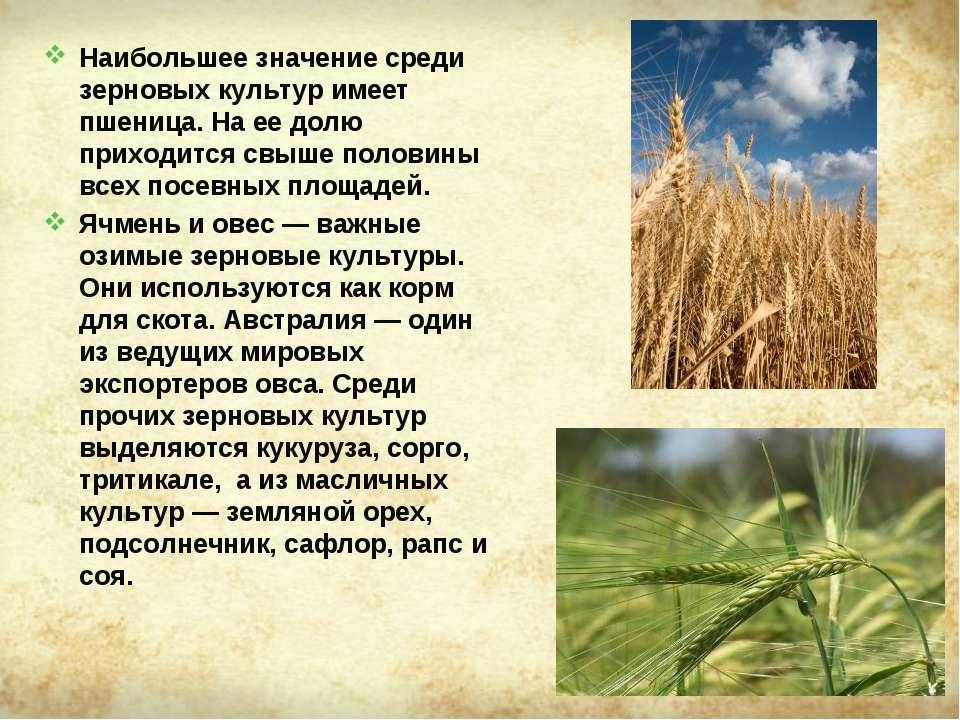 Наибольшее значение среди зерновых культур имеет пшеница. На ее долю приходит...