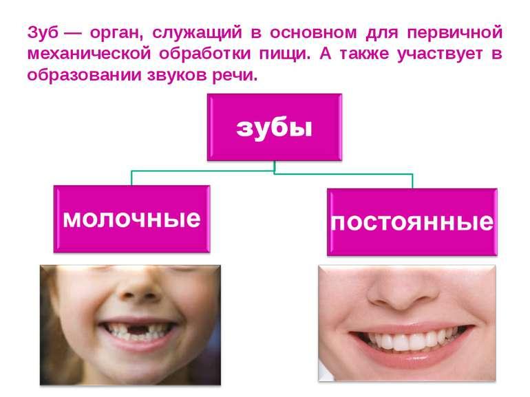 Зуб— орган, служащий в основном для первичной механической обработки пищи. А...