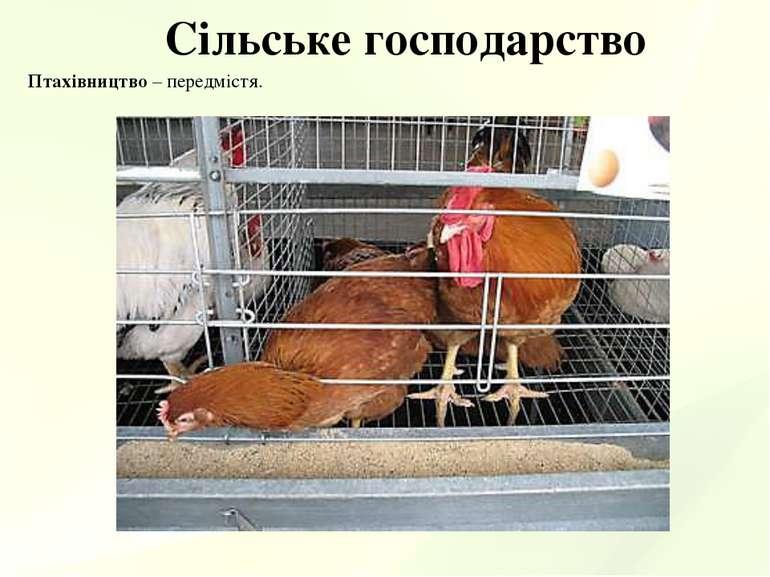 Сільське господарство Птахівництво – передмістя.