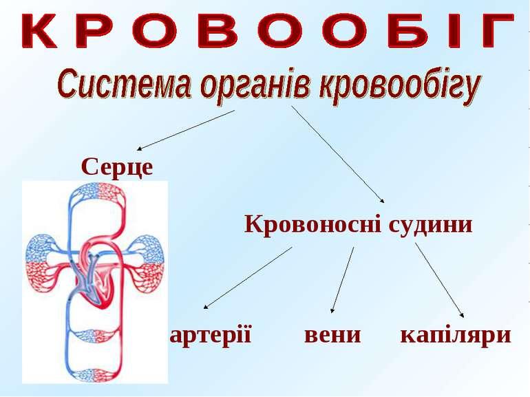Серце Кровоносні судини артерії вени капіляри