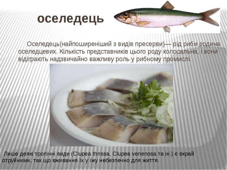 оселедець Оселедець(найпоширеніший з видів пресерви)— рід риби родина оселедц...