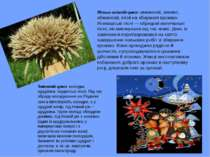 Літньо-осінній цикл: зажинкові, жнивні, обжинкові, пісні на збирання врожаю. ...