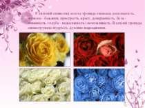 У світовій символіці золота троянда означала досконалість, червона - бажання,...