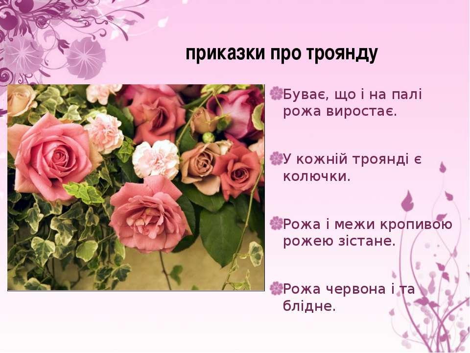 Буває, що і на палі рожа виростає. У кожній троянді є колючки. Рожа і межи кр...