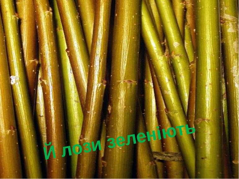 Й лози зеленіють