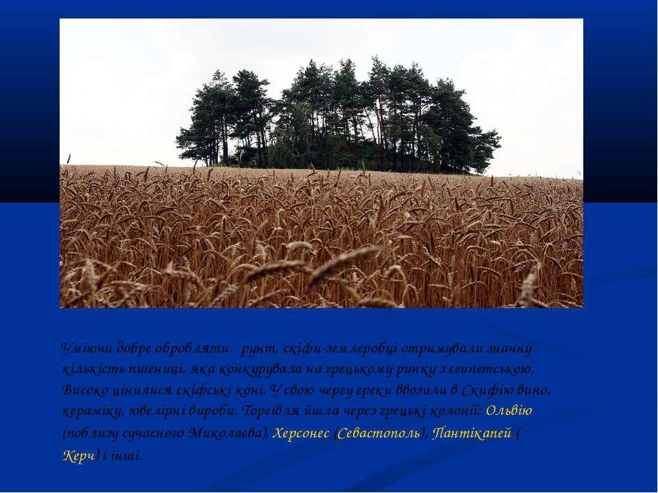 Уміючи добре обробляти ґрунт, скіфи-землеробці отримували значну кількість пш...