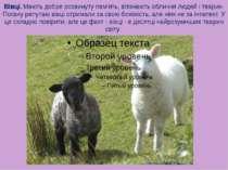Вівці. Мають добре розвинуту пам'ять, впізнають обличчя людей і тварин. Поган...