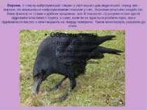 Ворони. У списку найрозумніших тварин у світі всього два види птахів, серед н...