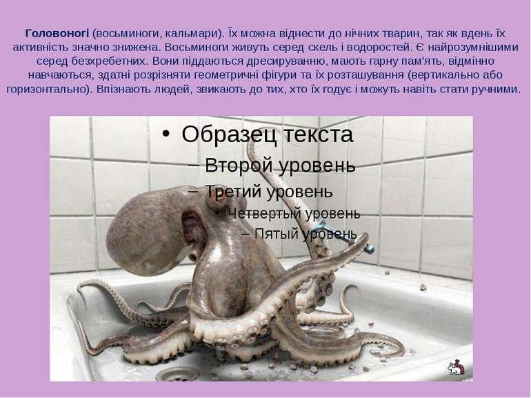 Головоногі (восьминоги, кальмари). Їх можна віднести до нічних тварин, так як...