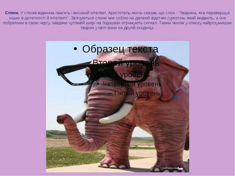 Слони. У слонів відмінна пам'ять і високий інтелект. Аристотель якось сказав,...