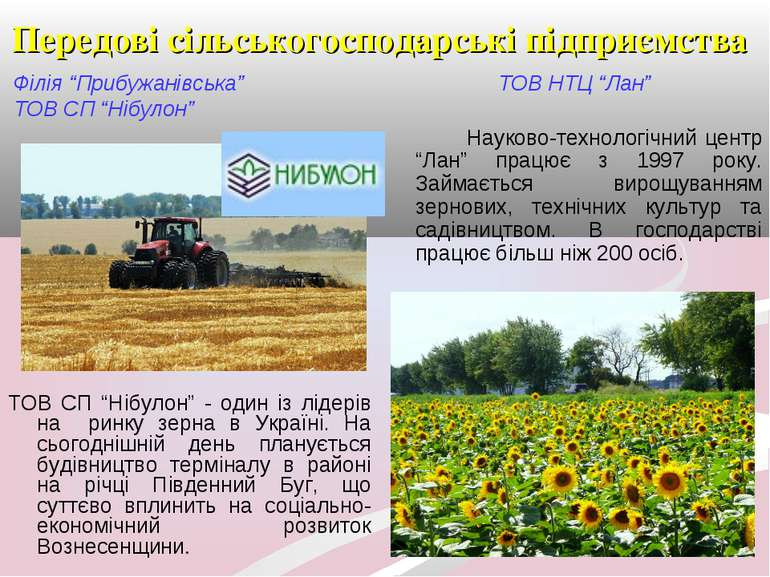 """Передові сільськогосподарські підприємства Філія """"Прибужанівська"""" ТОВ СП """"Ніб..."""