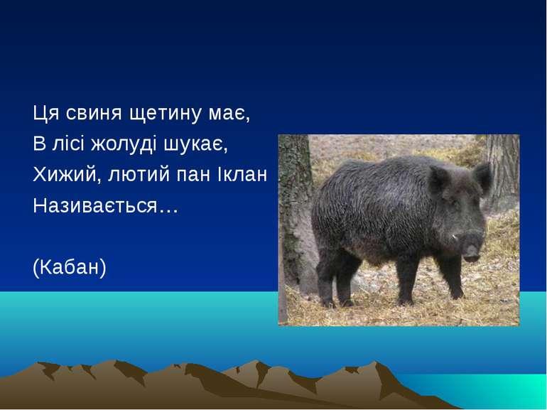 Ця свиня щетину має, В лісі жолуді шукає, Хижий, лютий пан Іклан Називається…...