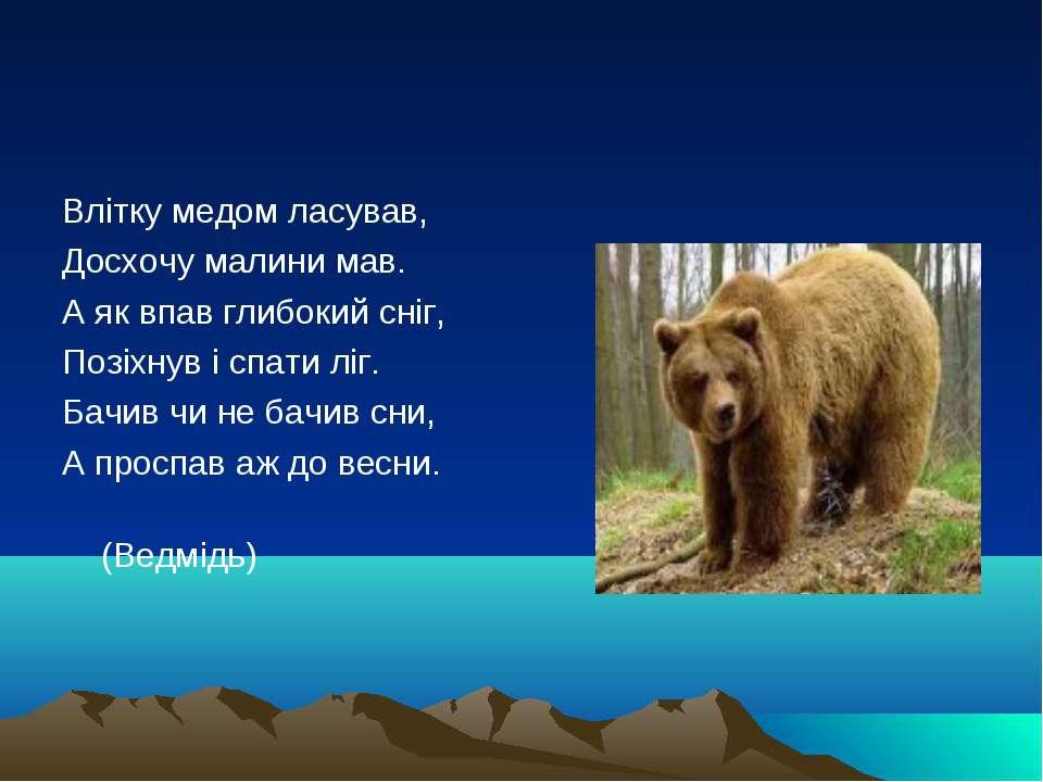 Влітку медом ласував, Досхочу малини мав. А як впав глибокий сніг, Позіхну...