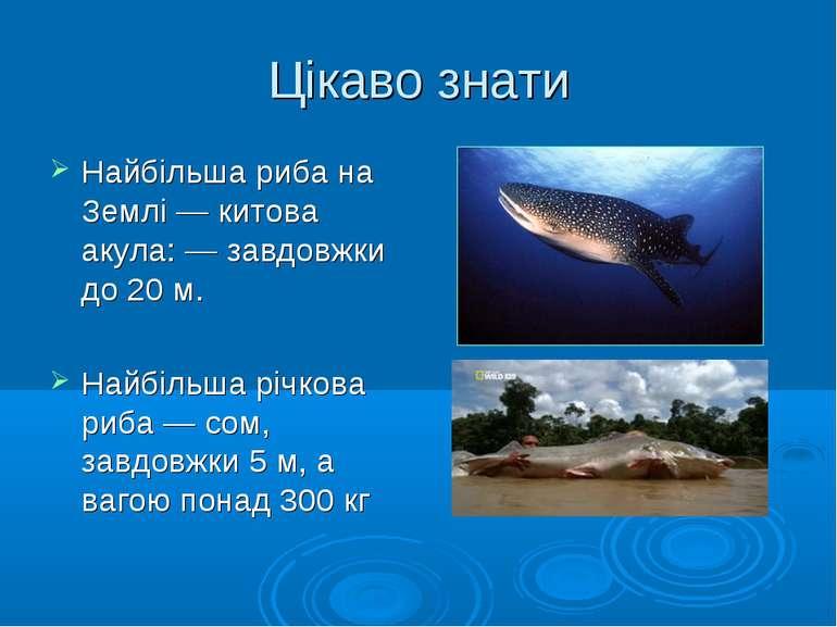 Цікаво знати Найбільша риба на Землі — китова акула: — завдовжки до 20 м. Най...