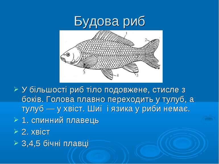 Будова риб У більшості риб тіло подовжене, стисле з боків. Голова плавно пере...