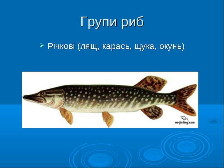 Групи риб Річкові (лящ, карась, щука, окунь)