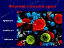 Формені елементи крові еритроцити лейкоцити тромбоцити