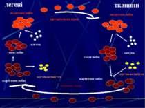 гемоглобін кисень гемоглобін оксигемоглобін оксигемоглобін кисень карбгемогло...