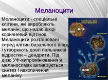 Меланоцити Меланоцити - спеціальні клітини, які виробляють меланін, що надає ...