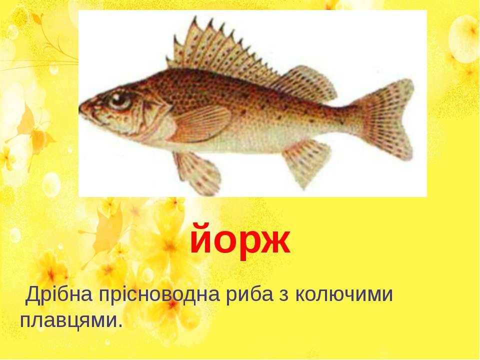 Дрібна прісноводна риба з колючими плавцями. йорж