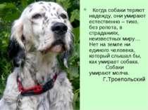 Когда собаки теряют надежду, они умирают естественно – тихо, без ропота, в ст...