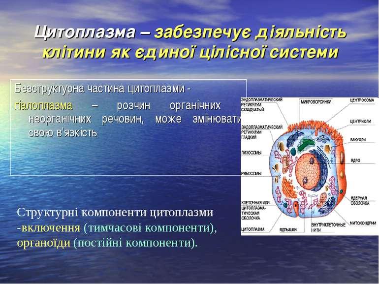 Цитоплазма – забезпечує діяльність клітини як єдиної цілісної системи Безстру...