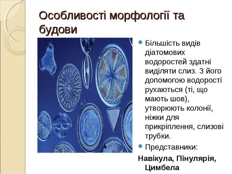 Особливості морфології та будови Більшість видів діатомових водоростей здатні...