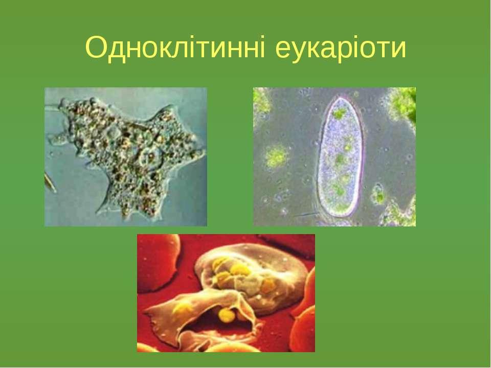 Одноклітинні еукаріоти