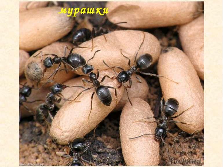 мурашки