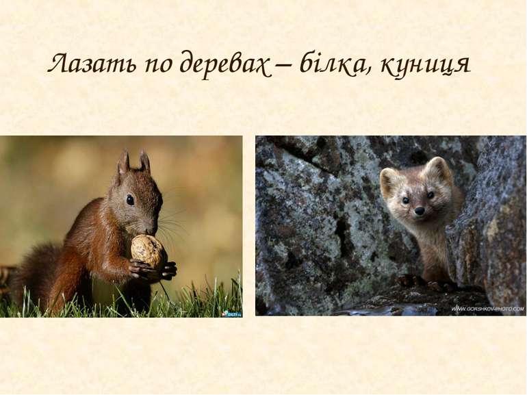 Лазать по деревах – білка, куниця