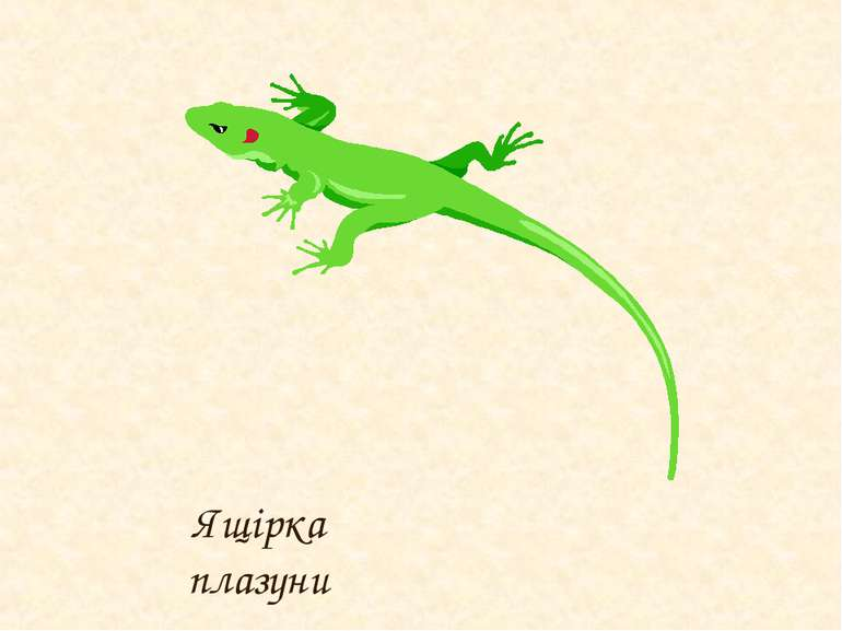 Ящірка плазуни