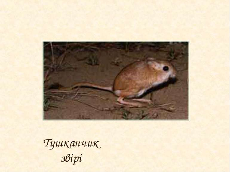 Тушканчик звірі
