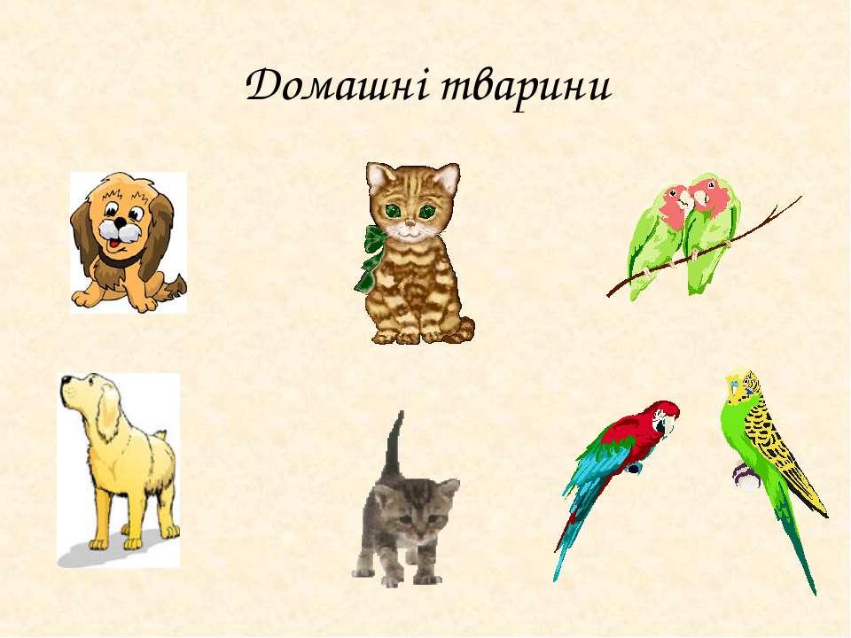 Домашні тварини