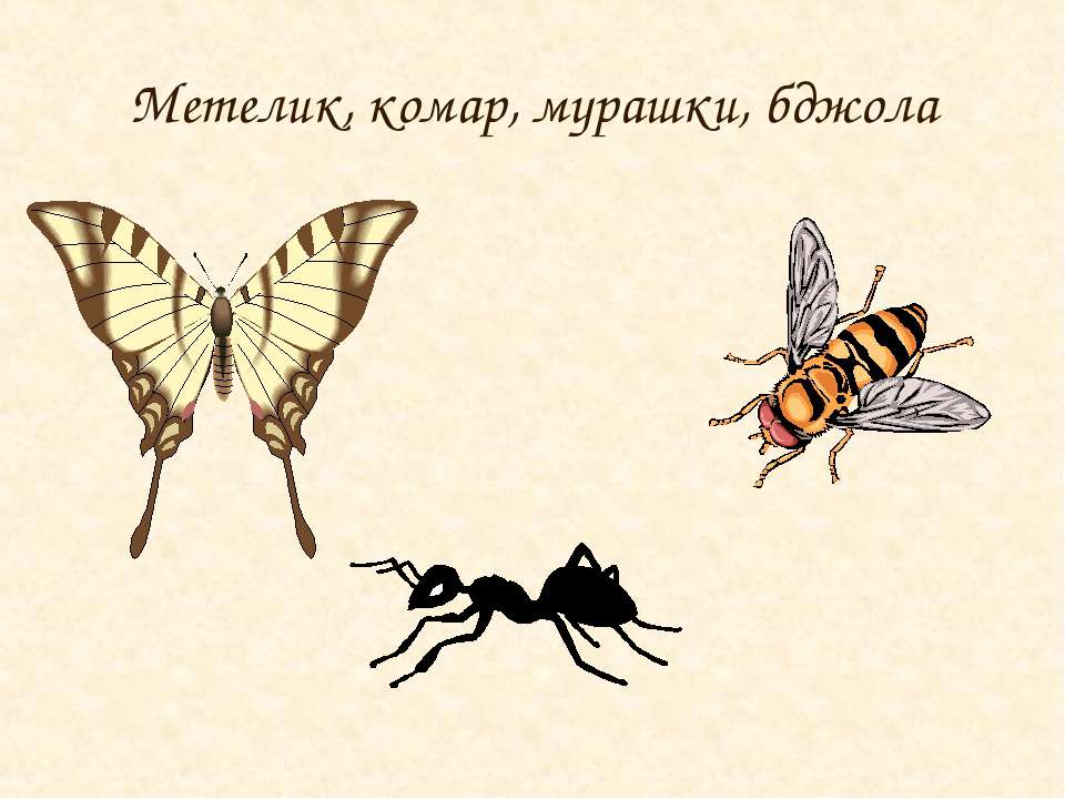 Метелик, комар, мурашки, бджола