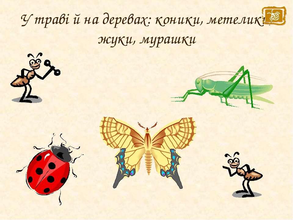 У траві й на деревах: коники, метелики, жуки, мурашки