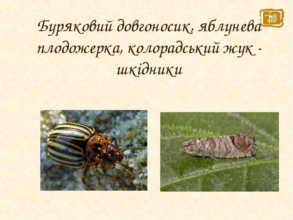 Буряковий довгоносик, яблунева плодожерка, колорадський жук - шкідники