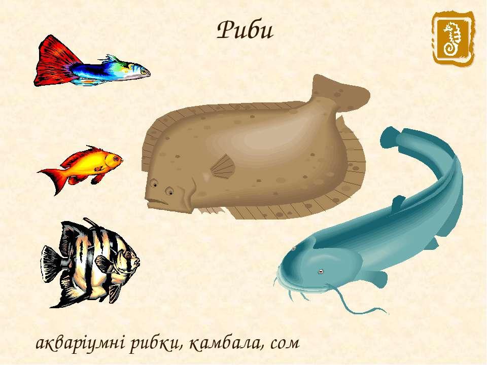 Риби акваріумні рибки, камбала, сом