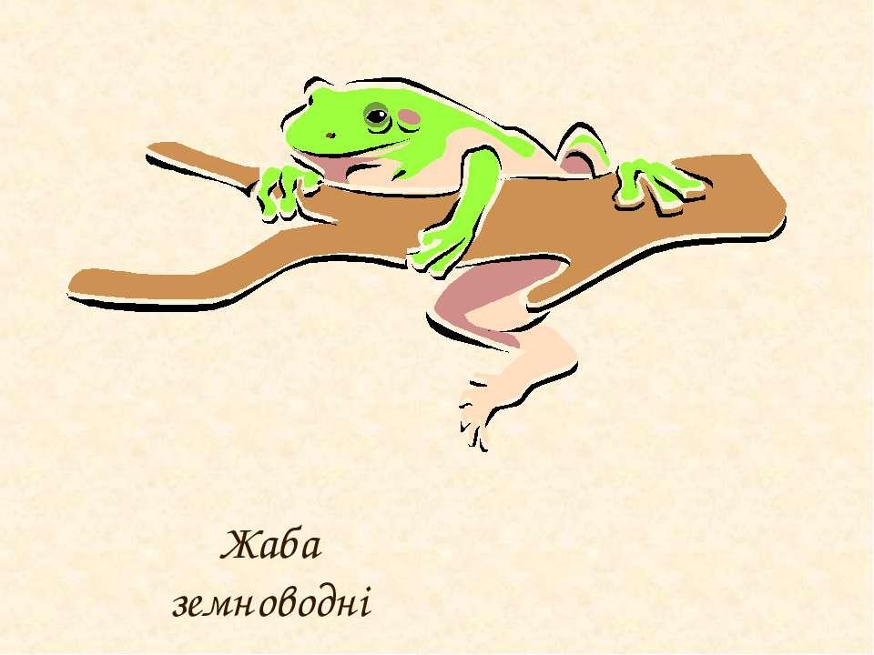Жаба земноводні