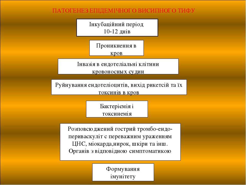 ПАТОГЕНЕЗ ЕПІДЕМІЧНОГО ВИСИПНОГО ТИФУ Інкубаційний період 10-12 днів  Проник...
